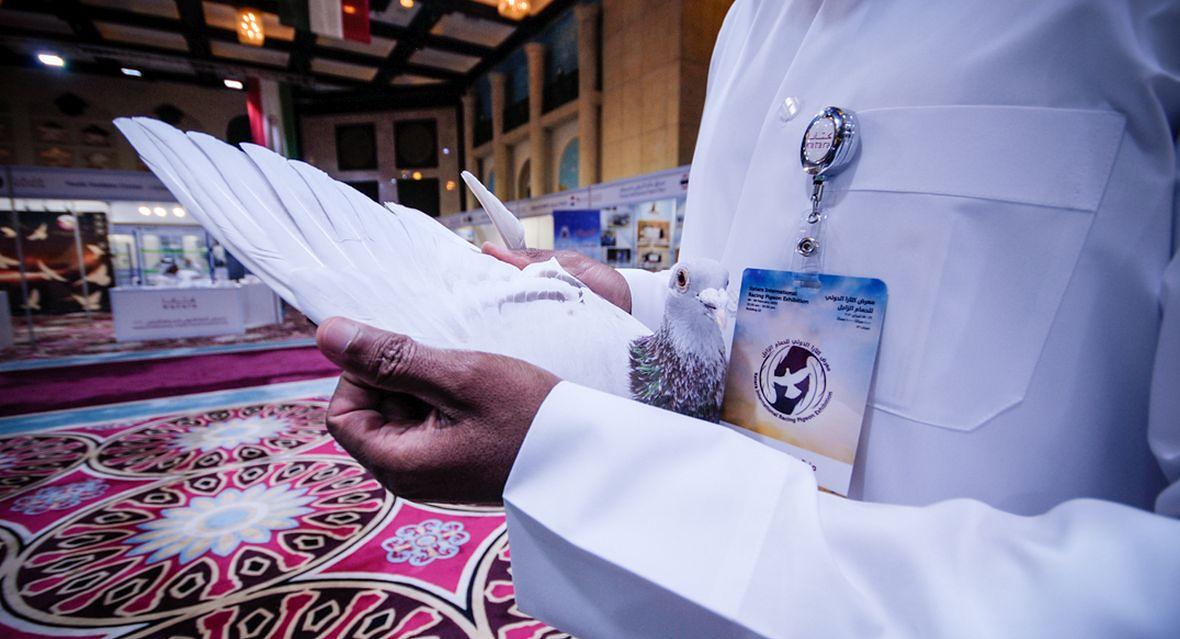 Jeden z wystawców prezentuje swojego ptaka na pierwszych Targach Gołębi w Doha