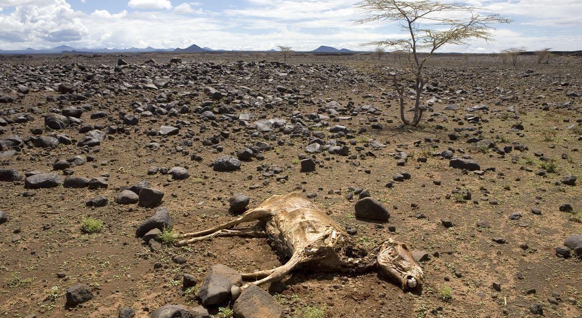 To nie kolejne pandemie, a zmiany klimatyczne są według futurologów największym zagrożeniem dla świata. Na zdjęciu: zwierzę padłe z powodu suszy w północno-wschodniej Kenii