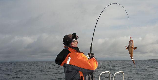 Coraz częściej dorsze łowione w Bałtyku nie należą do rekordowych okazów.