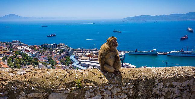 Terytorium Gibraltaru jest jedynym w Europie miejscem występowania małp magotów na wolności